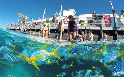 Great Barrier Reef Cruise with Snorkelling