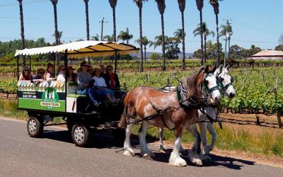 Horse drawn wagon tour, Swan Valley