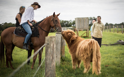 Horse riding tour Byron Bay