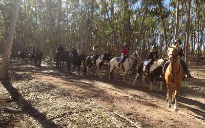 Horse riding tour Melbourne