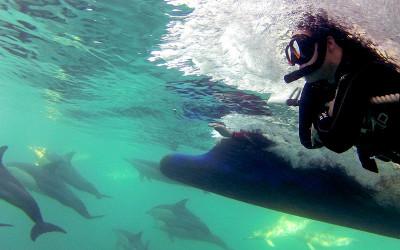 Swim with wild dolphins Port Stephens