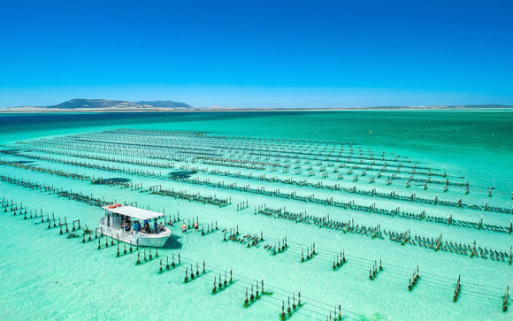 SA: Coffin Bay oyster farm and bay tour - 3 hours
