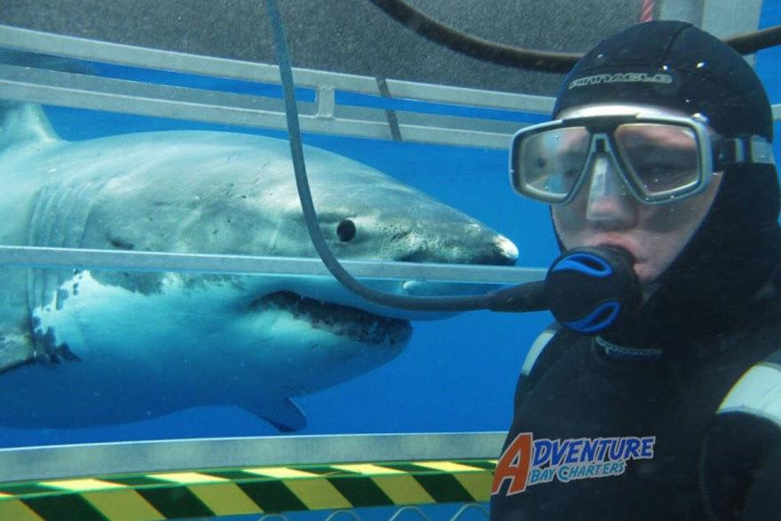 Shark diving Port Lincoln