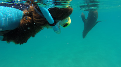woman snorkelling looking at a seal underwater