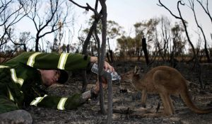 Information about bushfires in Western Australia, Northern Territory and South Australia
