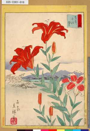 Tohru Senju Lily