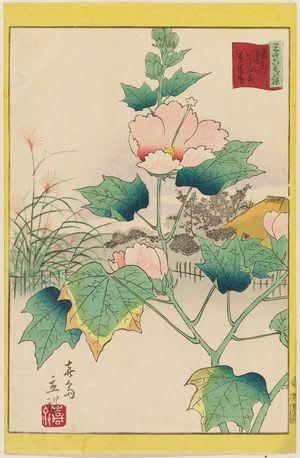 Hibiscus in the Flower Garden