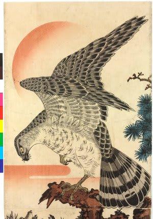 Hawk and Nestlings in Pine Tree by utagawa kuniyoshi