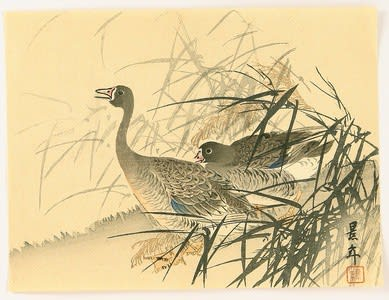 two geese, Imao Keinen, c. 1892, kacho-e