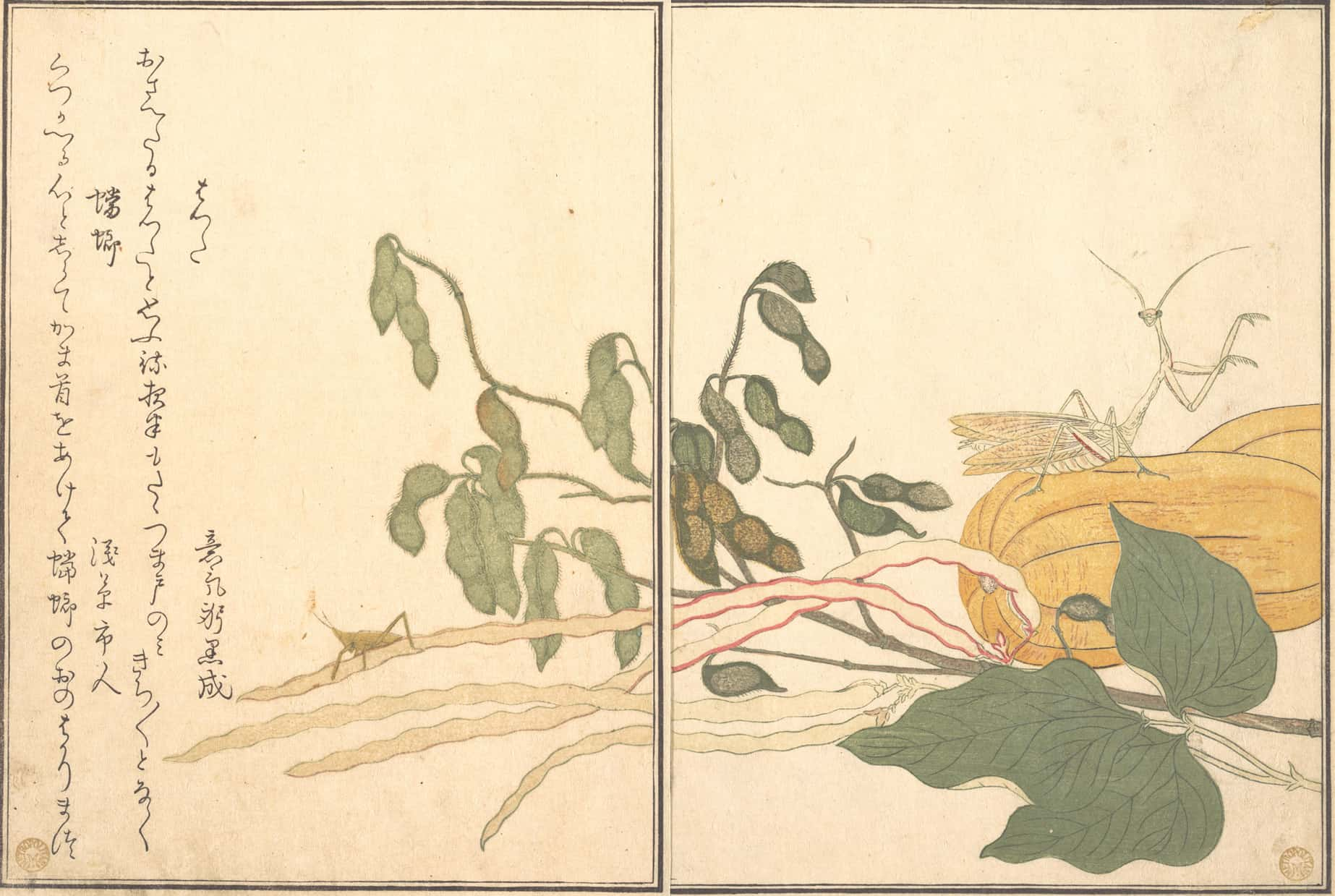 Praying Mantis and Cone-headed Grasshopper, Kitagawa Utamaro, c.1788,kacho-e
