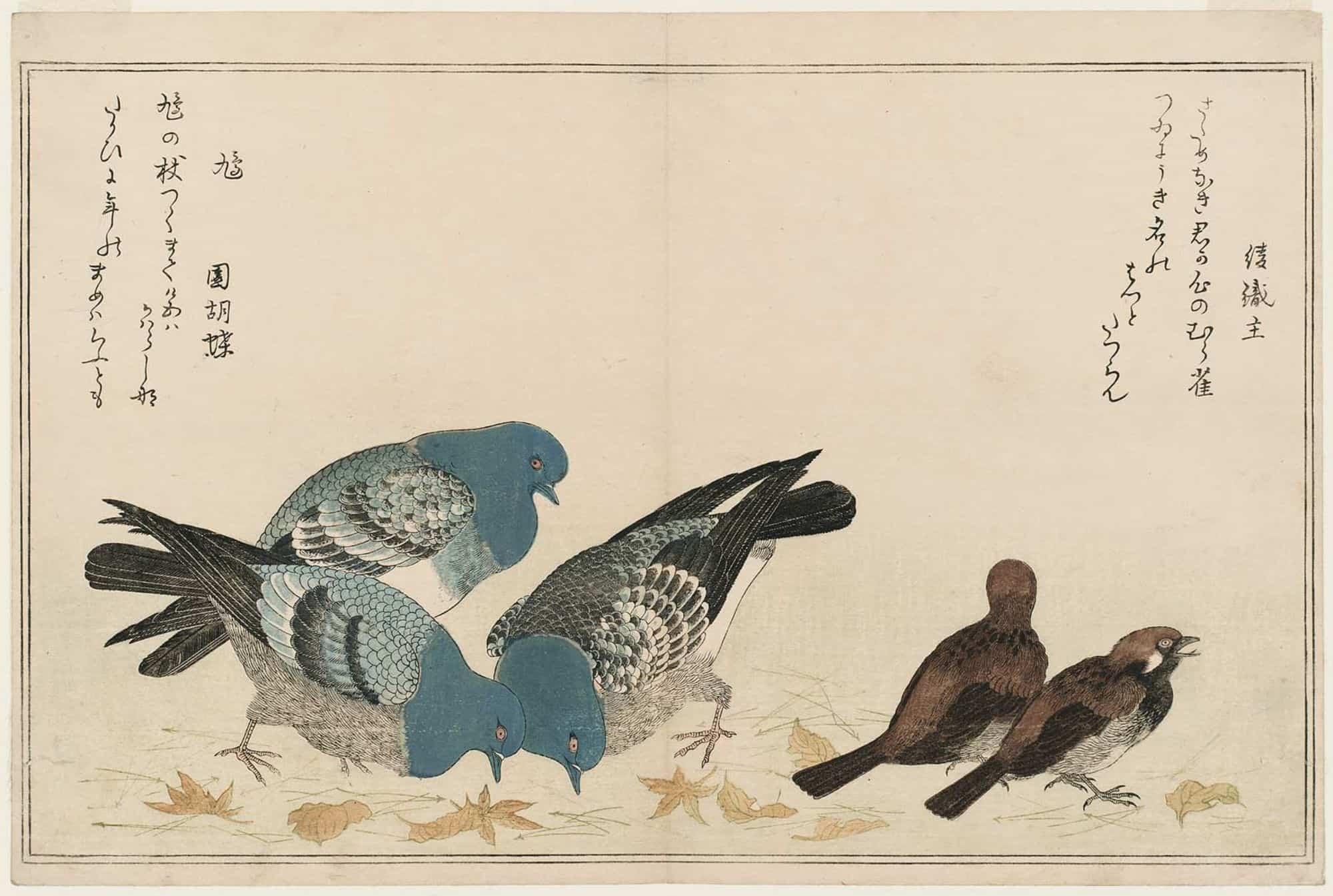 Sparrows (Murasuzume) and Pigeons (Hato), Kitagawa Utamaro, c.1790,kacho-e