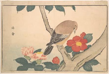 Camellias with a Bird,Kuwagata Keisai, c.1789, kacho-e