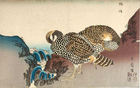 two pheasants by a stream, Kuwagata Keisai, c. Edo, kacho-e