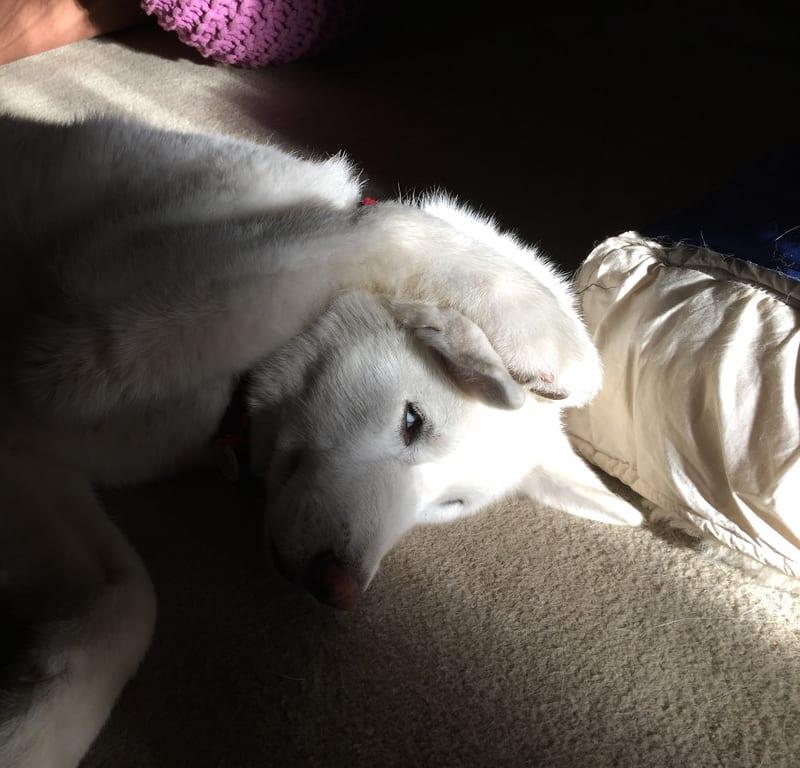 Sleeping in a Sunbeam / Red Wolf