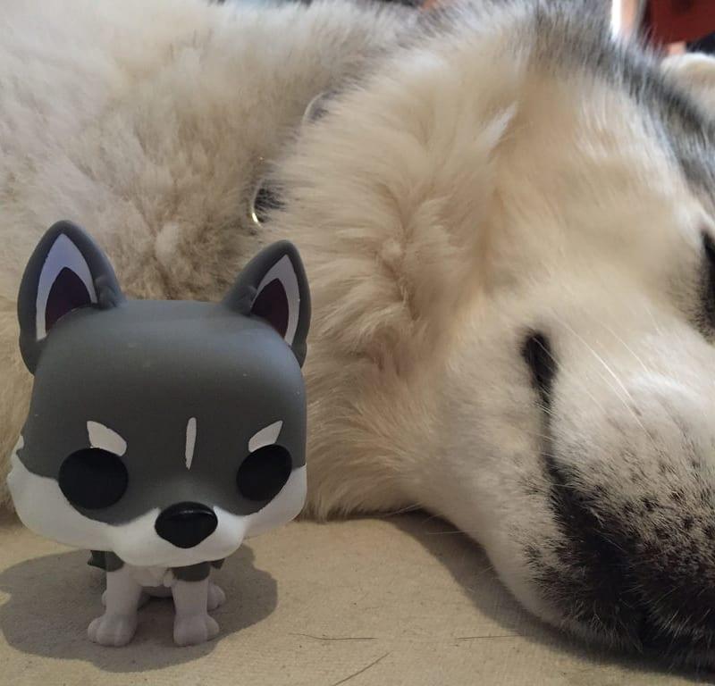 Funko Pop Husky Custom / Red Wolf