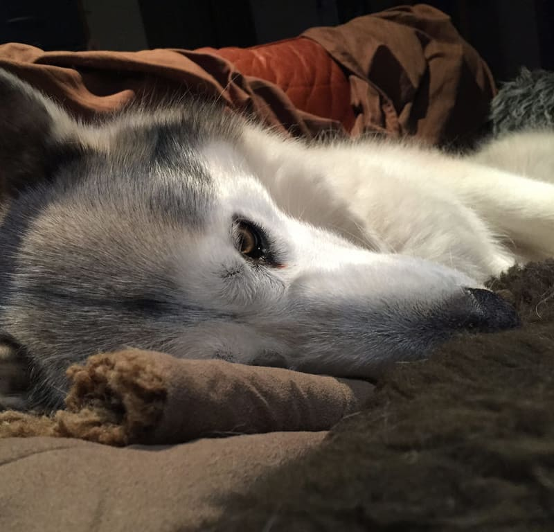 Determinedly Asleep / Red Wolf