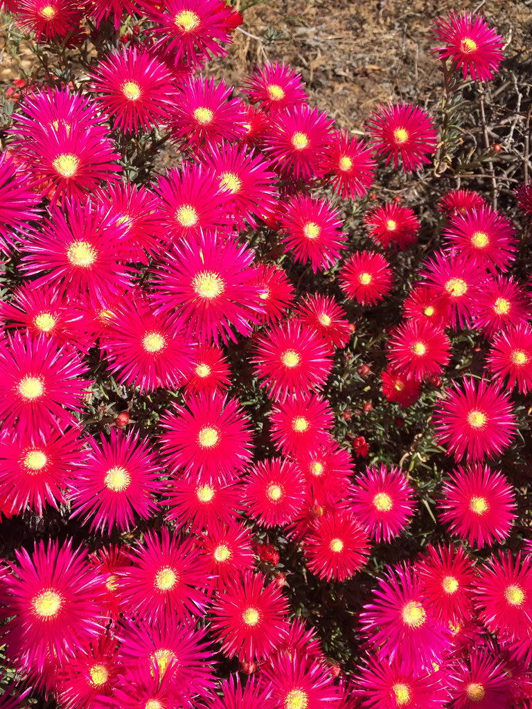 Clivia + Pigface / Red Wolf