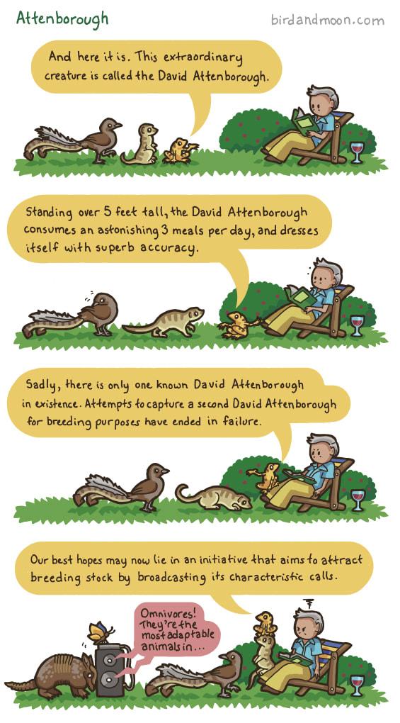 Attenborough / bird and moon