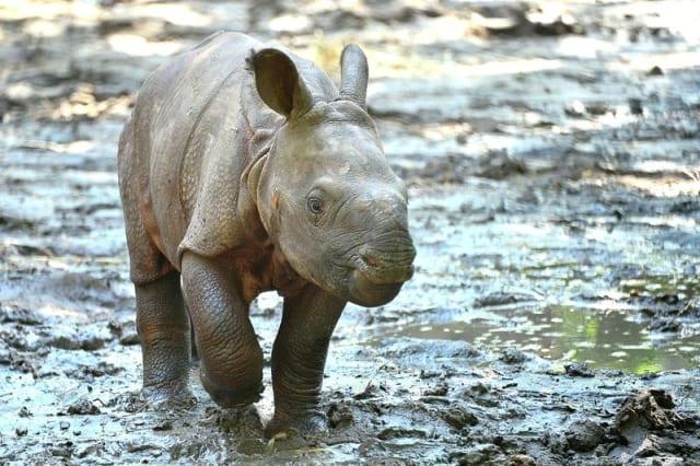 Indian Rhino / Lowry Park Zoo