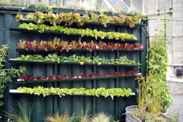 Garden made from rain gutters / Grow Food, Not Lawns