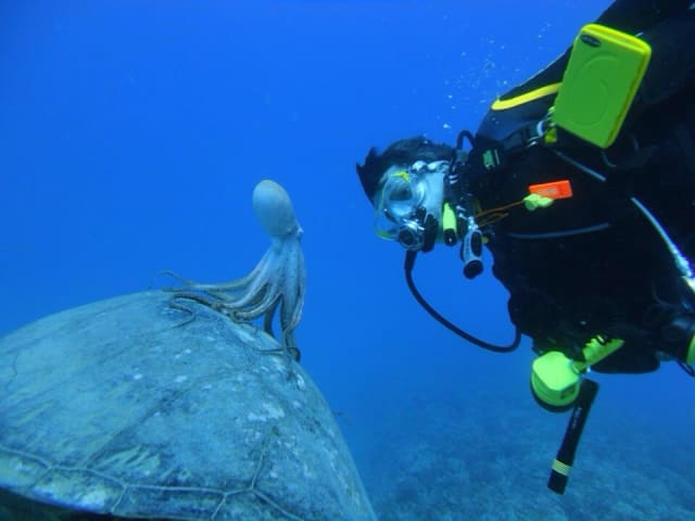 octopus riding a sea turtle / Monksealpup