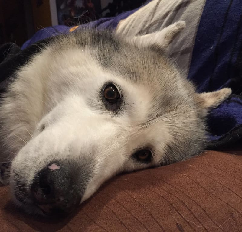 Burrito Pod / Red Wolf