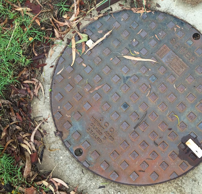 New Growth + Manhole Cover / Red Wolf