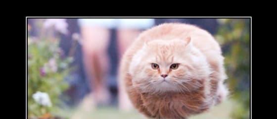 HTTP Status Cats API