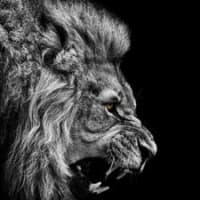 Lionfxpartners