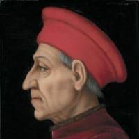 Lord Shepherd Tulips de' Medici