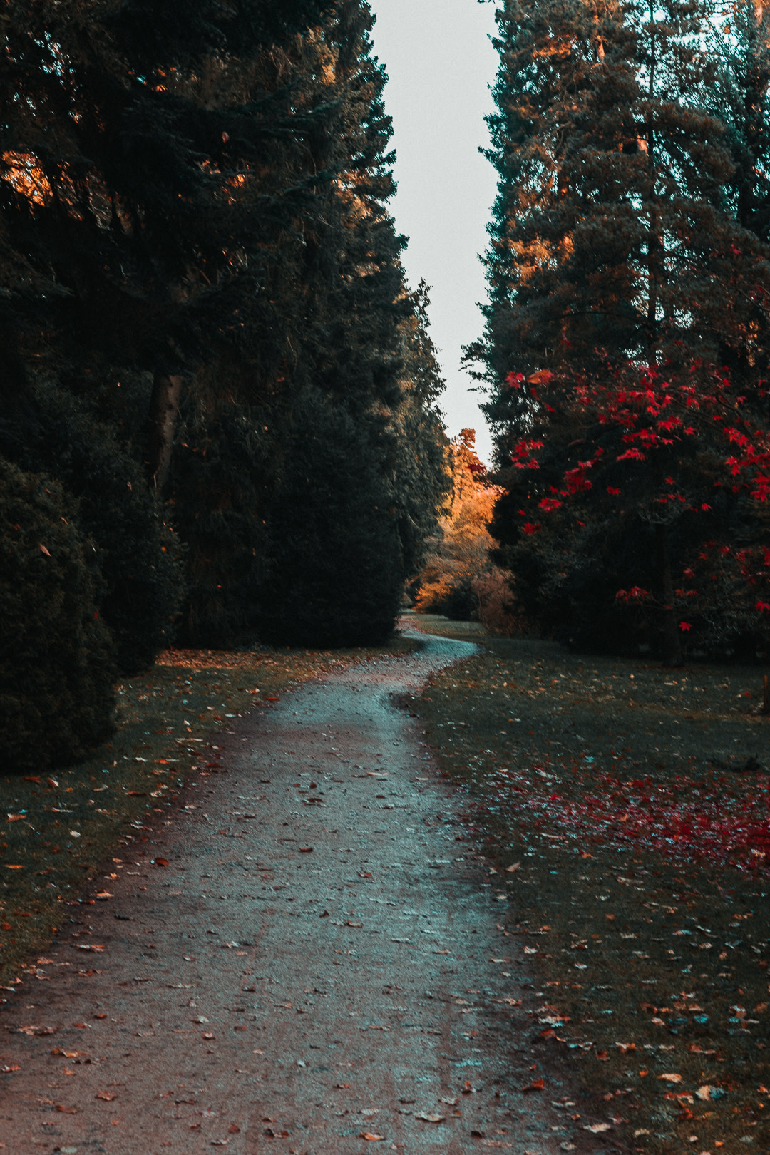 One of the Beautiful Seasonal Trails