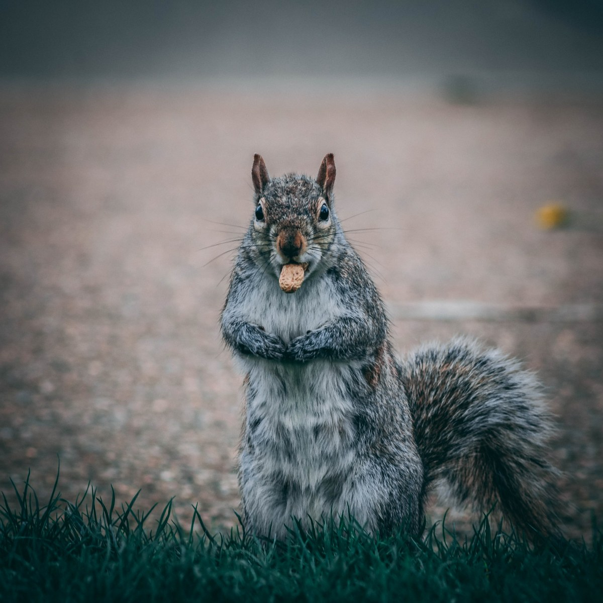 Hyde Park has so many squirrels which will come up to as they are really used to the people and just curious
