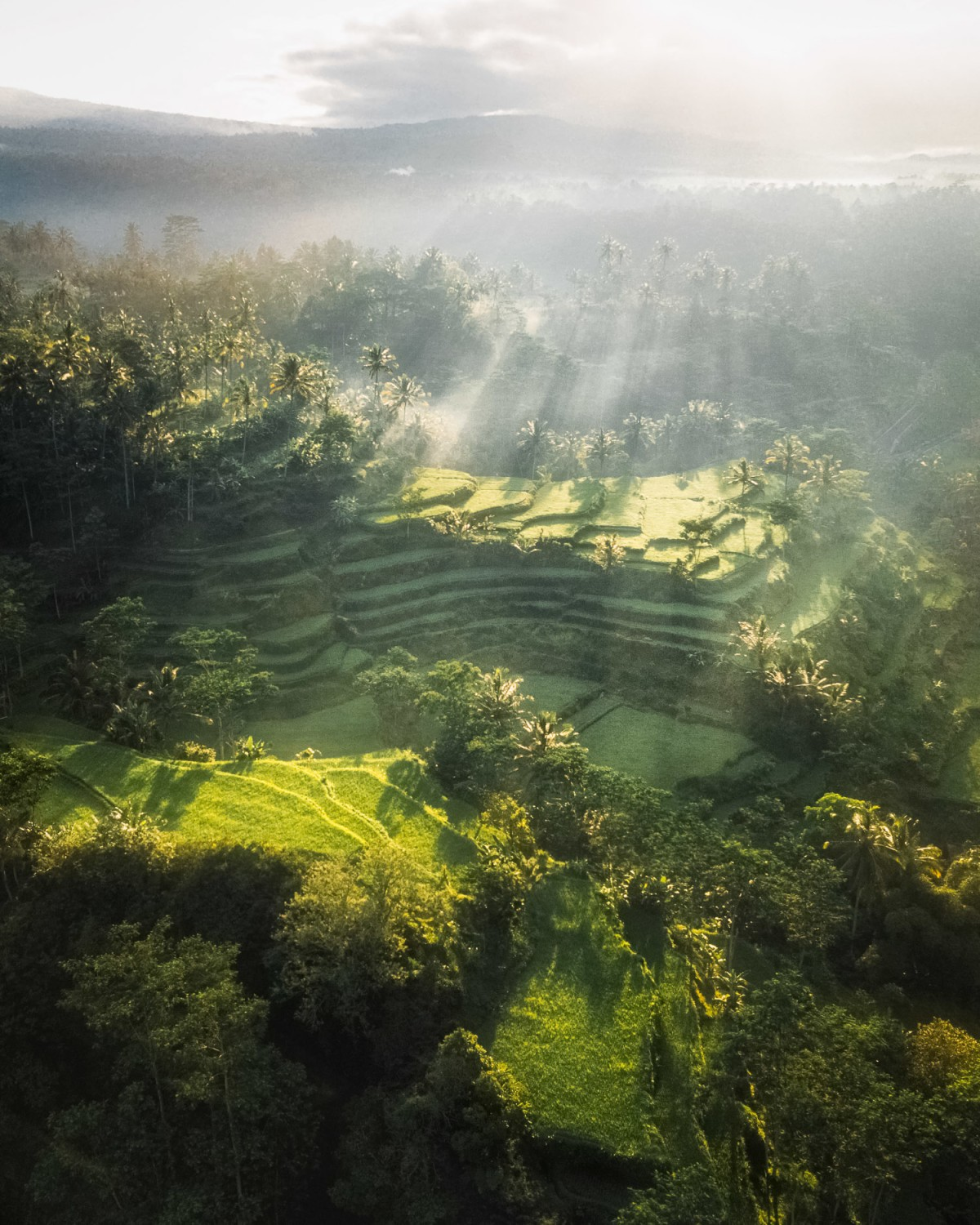Balinese mornings in the cooler and greener northern bali