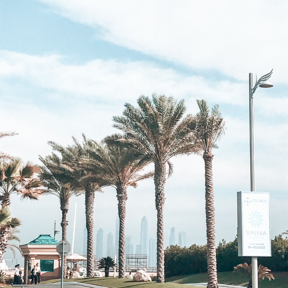 Palm trees and skyline, not the usual view