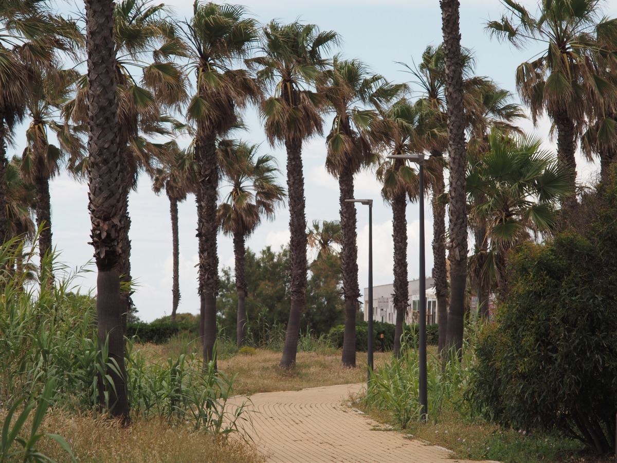 The main beach trail spans the entire length of the beach, over 2 km. There are also several trails that go inland, including the Camino Natural de Rota, which spans 7.5 km.