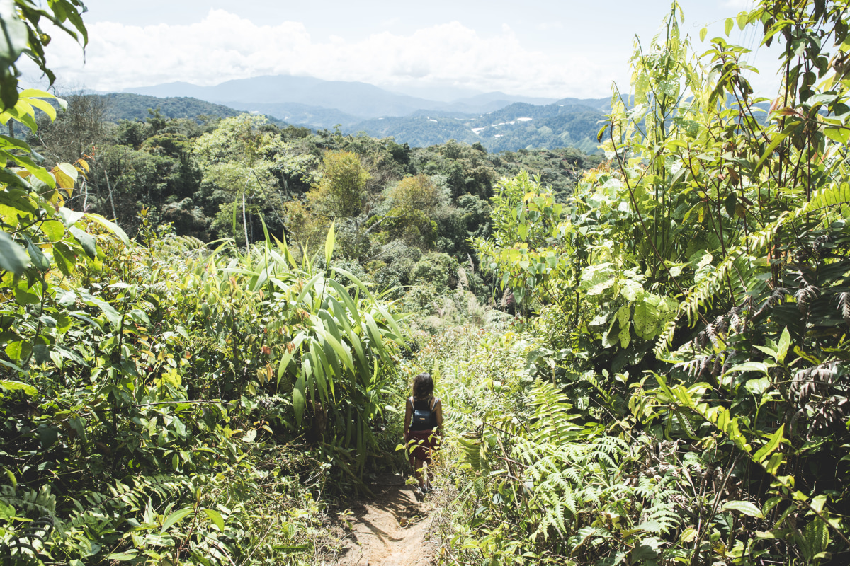 Trek trail