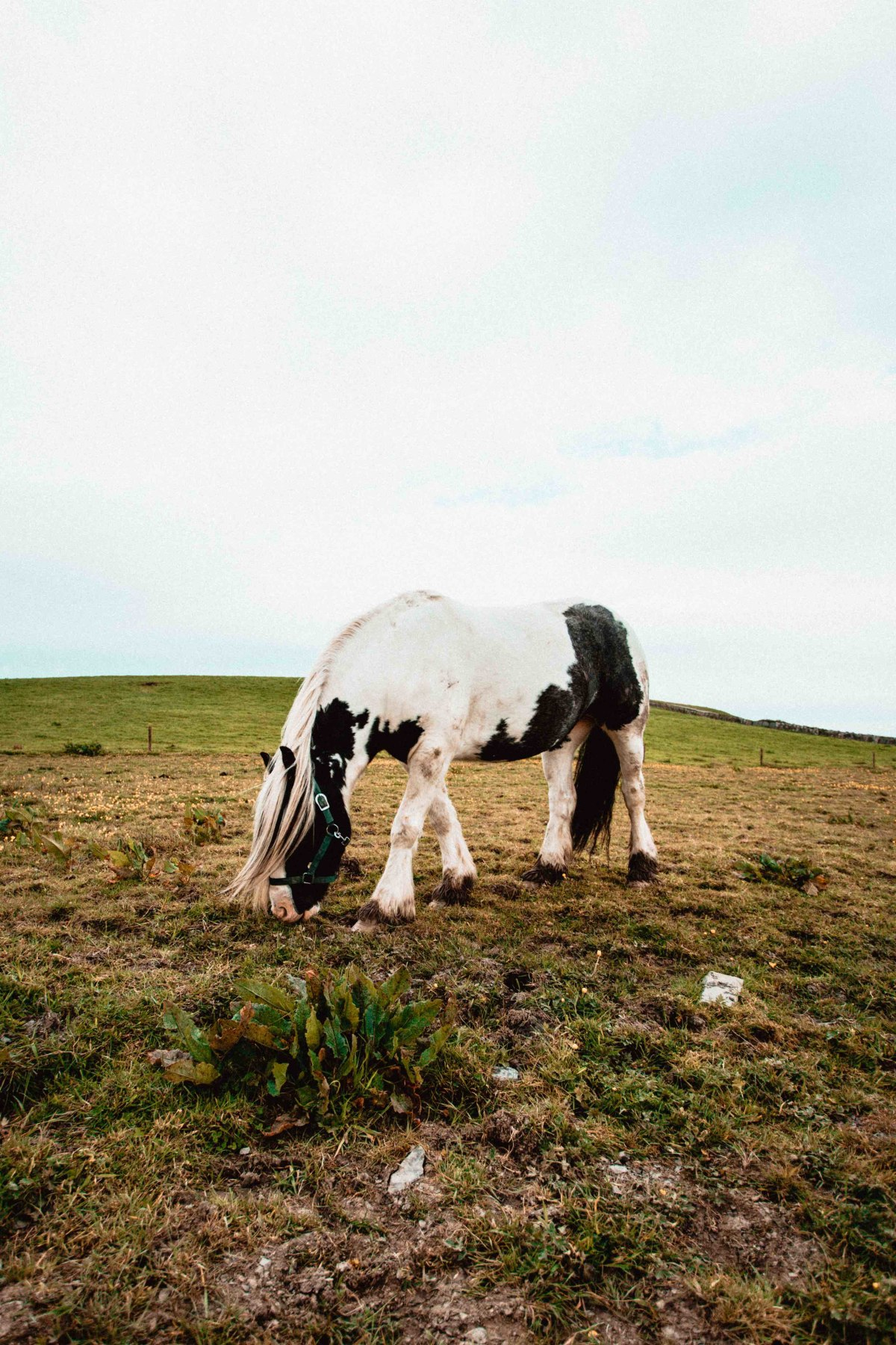 A horse near the Cliffs of Moher