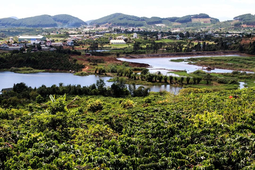 Coffe plantation
