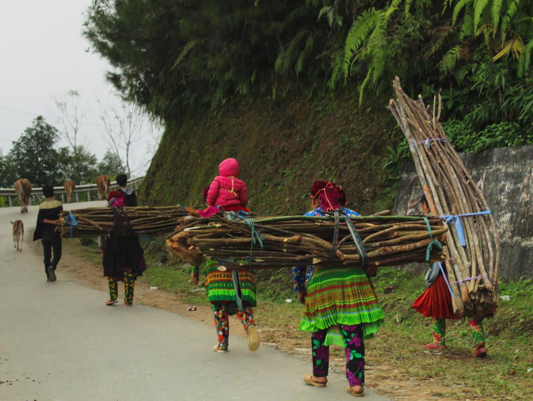 Hmong women carrying wood