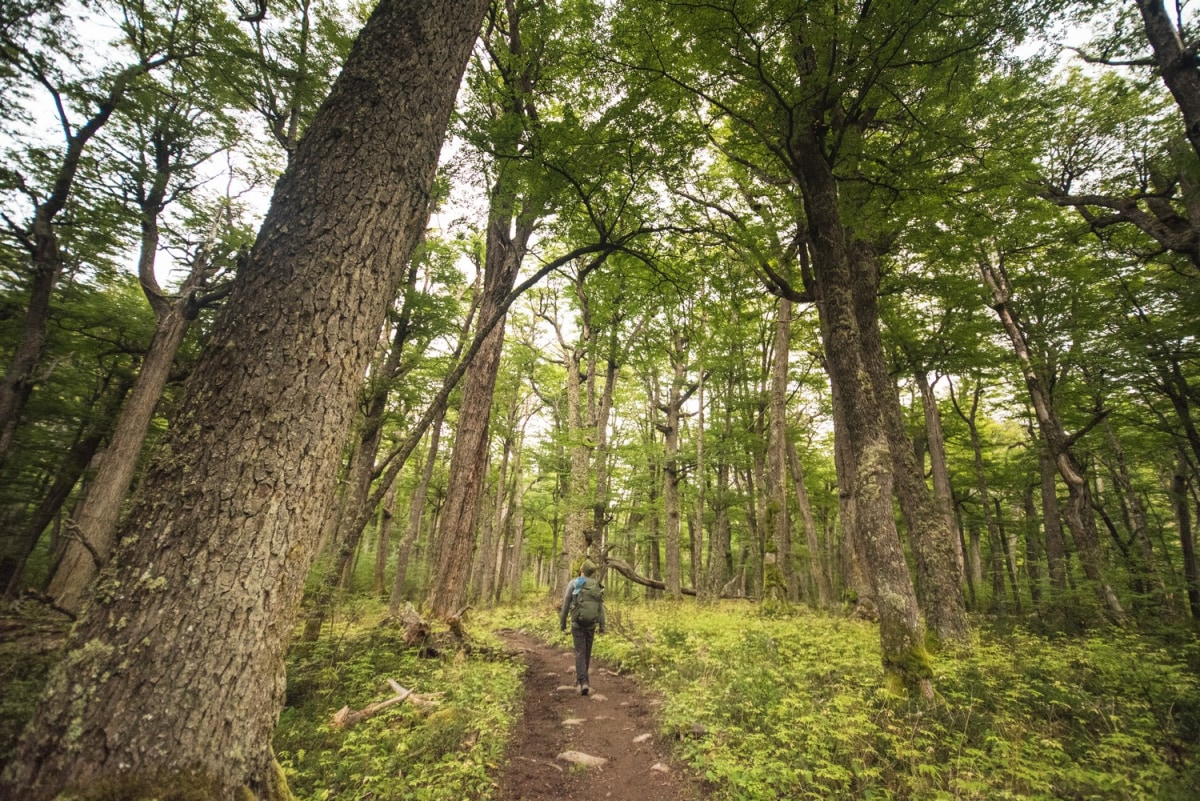 If you like native forests this trail was made for you!