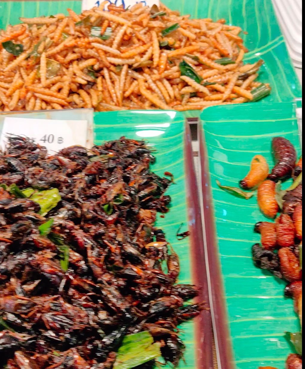 Fried worms, crickets