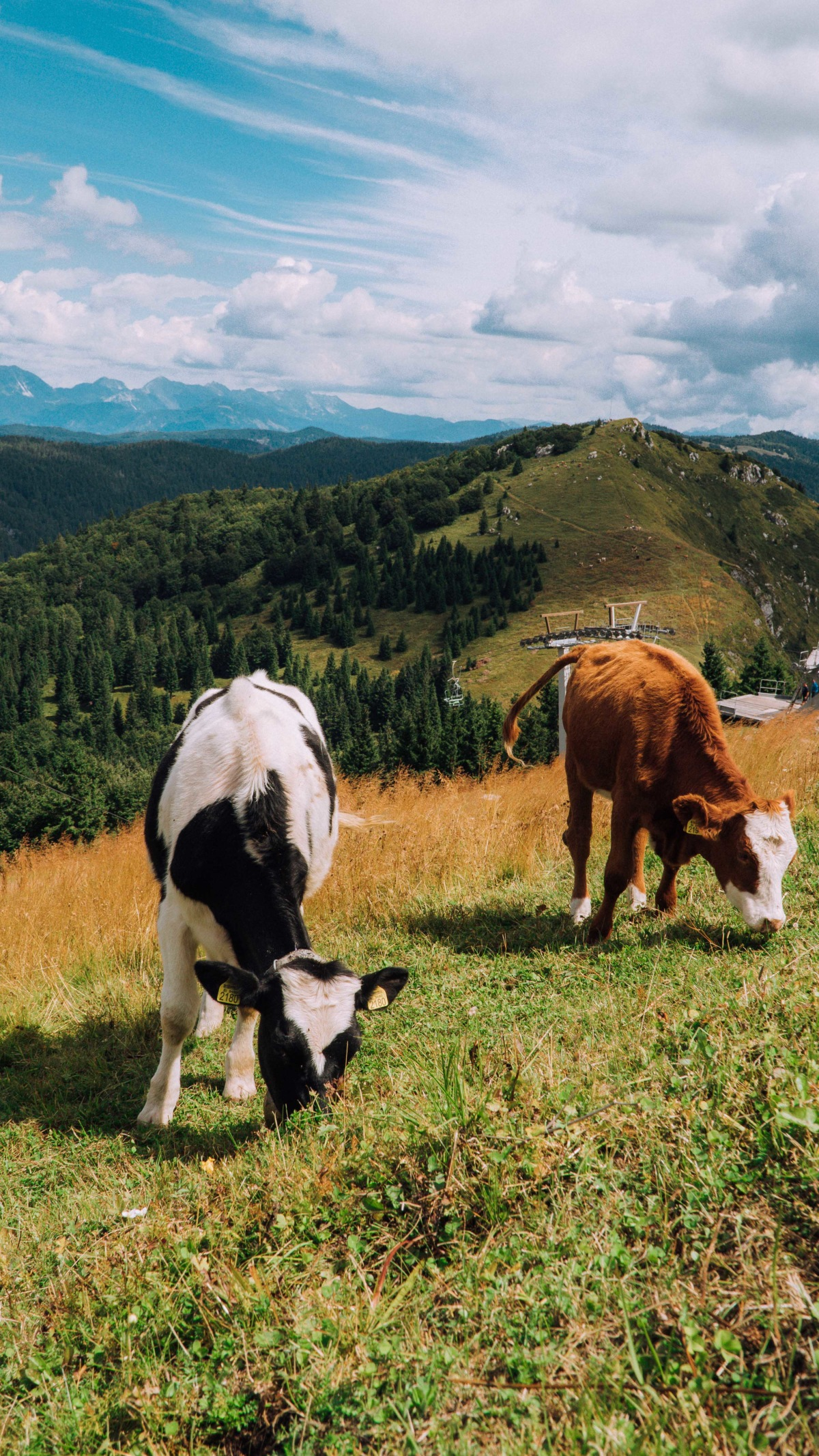 Meeting friendly cows along the way too