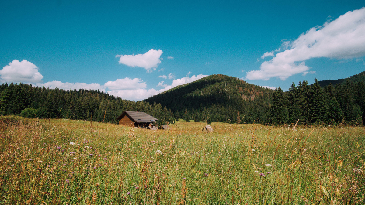 Sun-bathed meadow in Risnjak National Park