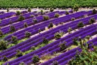 Erkunden Sie auf einer Wohnmobilreise mit uns die französische Provence.<br /> Besuchen Sie auf unserer empfohlenen Tour die schönsten Orte wie Avignon, Aix en Provence, Marseille, die Camargue, LÌsle sur la Sourge.