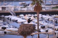 Im Winter ziehen die Störche an die Algarve - weil es warm ist...