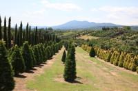 Auf unserer Sommertour mit dem Wohnmobil fahren Sie neben den Klassikern der Toskana wie Pisa, Florenz und Siena bis nach Umbrien hoch. Ihr Ziel ist der malerische Trasimetrische See...