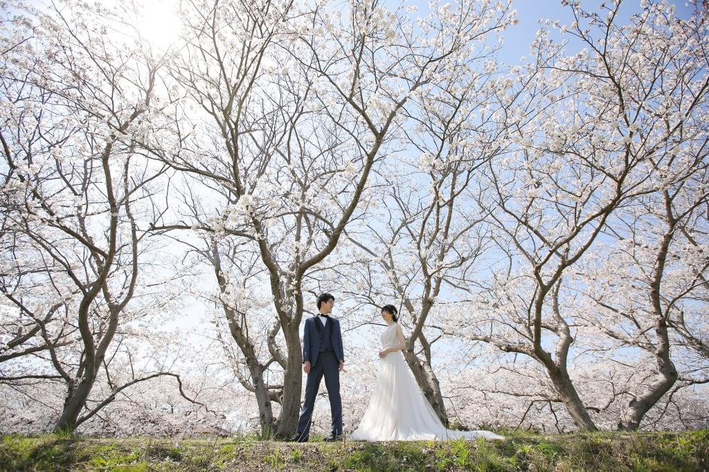 桜満開!天気にも恵まれて暖かい中、糸島へ行ってきました!