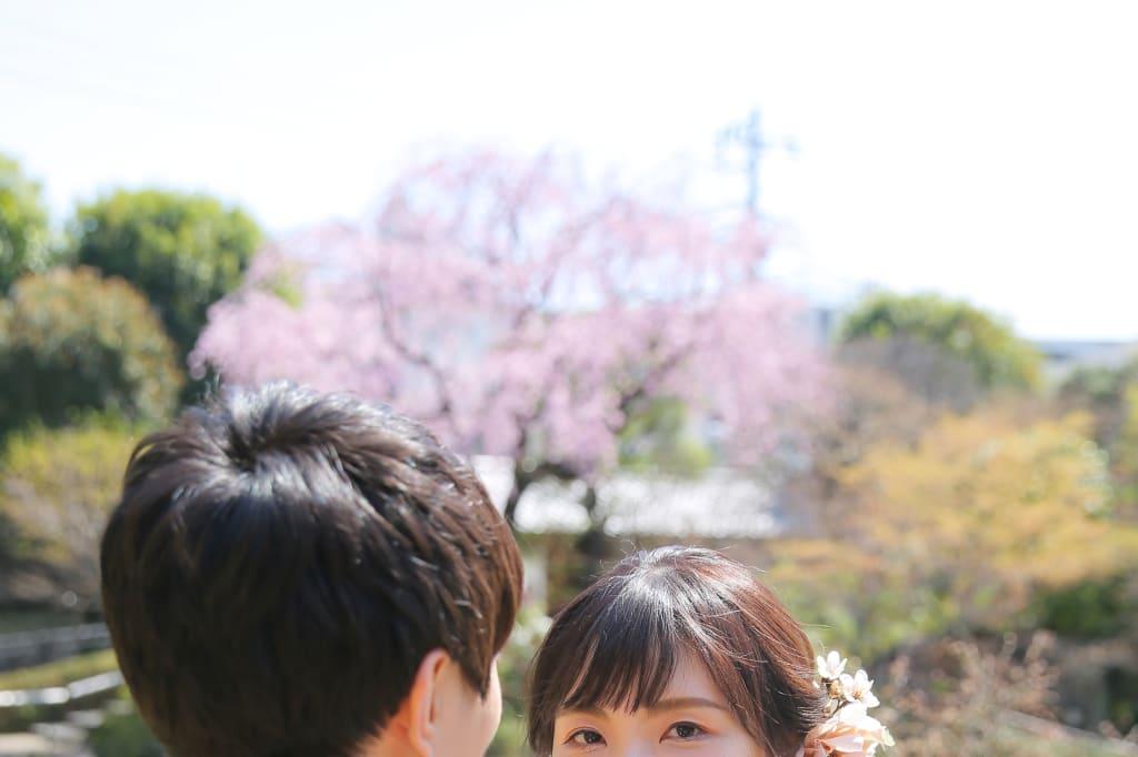 しだれ桜咲く中