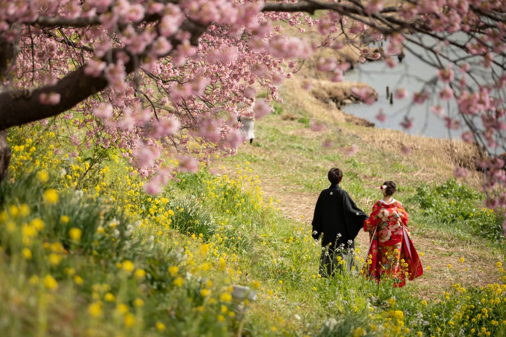 伊豆河津桜といえば