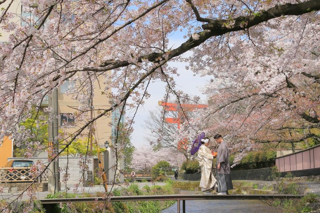 春_IMG_8332.JPG